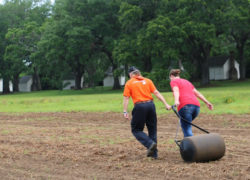 Volunteers sought to help plant Sea Island cotton at McLeod
