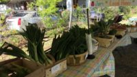 Vendors needed for new Town Market on James Island starting July 8