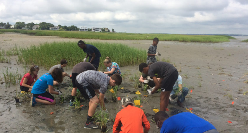 Seeds to Shoreline marsh restoration program
