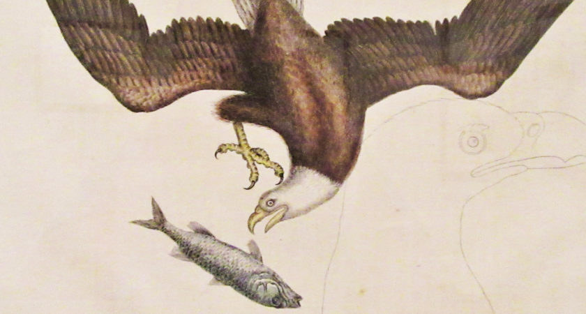 FOLLOW YOUR ART Artist, Scientist, Explorer: Mark Catesby in the Carolinas at the Gibbes