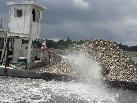 DNR plants recycled shells on public harvesting grounds each summer. It takes 10,000 bushels or more to restore an acre of shellfish beds.