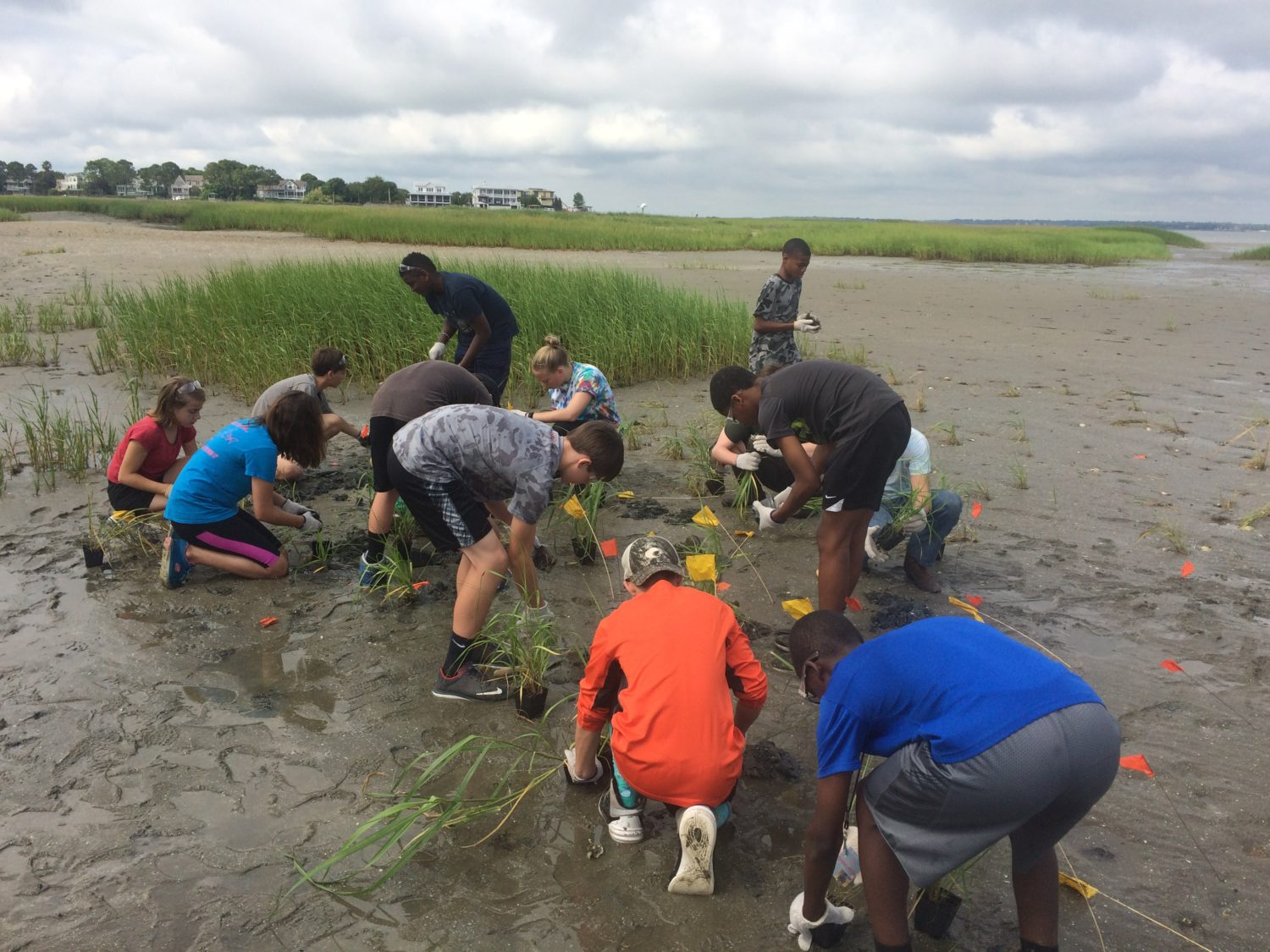 Students planting marsh grass behind an oyster reef in Mount Pleasant.