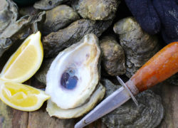 How to Make the Most of Oyster Roast Season!