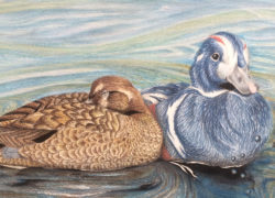 Congrats to Destiny Denue, 1st place in Federal Junior Duck Stamp Contest